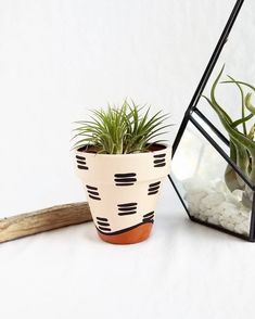 Decorative Planters, Diy Planters, Indoor Planters, Fall Planters, Plants Indoor, Air Plants, Painted Plant Pots, Painted Flower Pots, Painted Pebbles