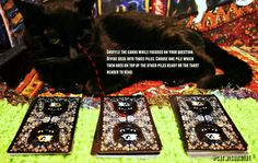 Mew Year's Day Tarot 2017 Predictions #psychiccatClyde - Cat Wisdom 101