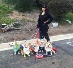 Corgi Avengers Will Defend The Earth With Cuteness