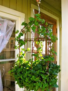 love this birdhouse with ivy climbing on it....so cute by the front door!