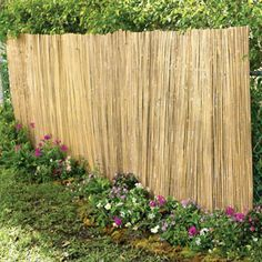 Bamboo covering a chain link fence.