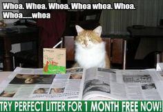 cat best litter
