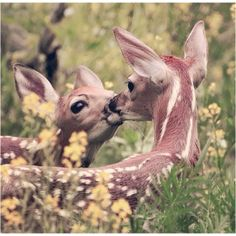 bambi is cute. two bambi are irresistible. Cute Creatures, Beautiful Creatures, Animals Beautiful, Woodland Creatures, Nature Animals, Animals And Pets, Wild Animals, Small Animals, Nature Nature