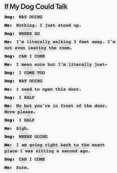 Conversation with a dog :)