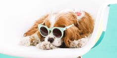 These Dogs In Sunglasses Will Give You The Giggles