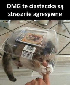 Funny Animal Memes, Funny Animal Pictures, Cat Memes, Funny Animals, Cute Animals, Funny Quotes, Animal Jokes, Funny Posts, Funny Cat Photos