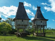 Traditional East-Timorese houses near the city of Los Palos, Timor Leste Contributed by Daniel Fernandes