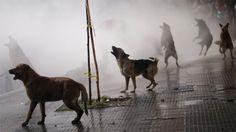 """O GRITO DO BICHO"": Foto espetacular feita no Chile"