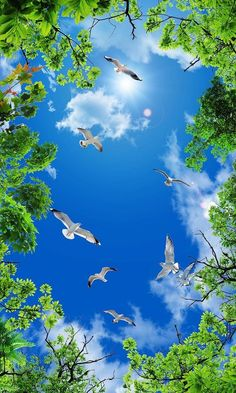 Beautiful Birds Soaring in the Sky Beautiful Birds, Beautiful World, Beautiful Images, Beautiful Landscape Wallpaper, Beautiful Landscapes, Photo Backgrounds, Background Images, Insta Photo, Nature Pictures