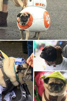 A parade of pugs dressed as Star Wars things has happened – and judging by the Twitter coverage it was the 'best day' of all the attendees' lives.  Bug-eyed pugs of all shapes, colours and sizes trotted along the street at the annual Pug Crawl in Portland, Oregon – dressed as Wookies, space crafts and other more specific Star Wars settings and characters.