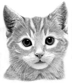 Kitten Drawing by Ronny Hart