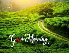 Free nature good morning photo download & share