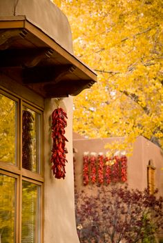 Aspens, adobe and ristras. NM