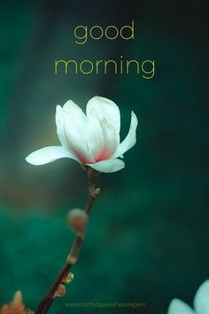 48 Best Good Morning Flowers Images Images Good Morning Good