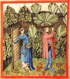 Tacuinum Sanitatis, ca. 1400 Cabbage  Bibliothèque nationale de France, Paris