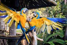 Umgeni River Park River Park, Africa Travel, Parrot, Bird, Animals, Parrot Bird, Animales, Animaux, Birds
