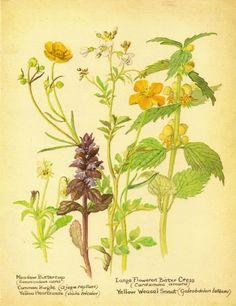 edith holden art | Edith Holden Edwardian garden botanical