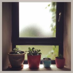 Day Three #100DaysOfHappiness #Succulents #HousePlants