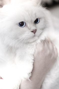 Precious!! by Ali.K Photography / Post Processing, via Flickr