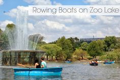 T & Serendipity: Zoo Lake: Row All The Boats!