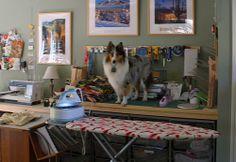 Barkley helping with ironing