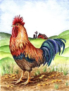 paintings roosters | Rooster - Original Watercolor Paintings, Animals and Birds, Roosters ...
