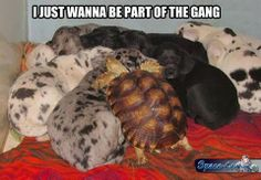 Just wanna be part of the gang ~ Funny pictures