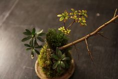 Kokedama | Flickr - Photo Sharing!