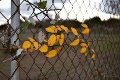 #leaves #mallorca #mallorcatestim #igersmallorca #estaes_baleares by crrigo