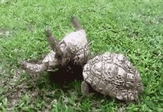 """Tortoise """"helping hand""""…click on picture for action! ♥♥♥"""