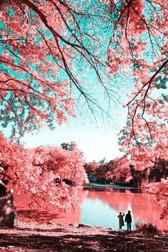 Photographer Paolo Pettigiani uses infrared photography to transform the lush green trees and grass of Central Park into milky, cotton candy pinks. Infrared Photography Transforms Central Park into Surreal Wonderland Lauras kunterbunte Welt lauraki Spring Photography, Color Photography, Digital Photography, Amazing Photography, Landscape Photography, Photography Ideas, Photography Backdrops, Photography Accessories, Photography Lighting