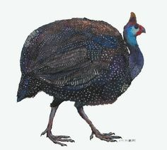 "Alexandra Milton ""Helmeted Guinea Fowl"" #art"