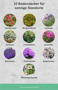 Hillside Garden, Garden Paths, Garden Landscaping, Dream Garden, Home And Garden, Nature Aesthetic, Balcony Garden, Fashion Room, Clematis