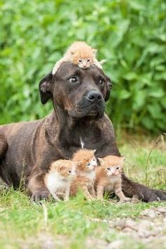 13 Confused Dog Photos And Memes That Will Leave You Laughing Cute Funny Animals, Cute Baby Animals, Animals And Pets, Cute Cats, Funny Birds, Nature Animals, Funny Cats, Beautiful Cats, Animals Beautiful