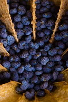 tiny blue poppy seeds   Flickr - Photo Sharing!