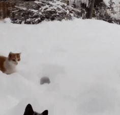 Cute Funny Cats Playing in Snow! Funny and Hilarious Cats who really adore a snow! Look more Funny & Cute gifs and pictures of Lovely Cats on the site! Cute Funny Animals, Funny Cute, Cute Cats, Crazy Cat Lady, Crazy Cats, Video Chat, Photo Chat, I Love Cats, Animals And Pets