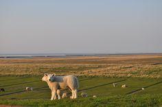 kwelderland vanaf de zeedijk bij Hornhuizen