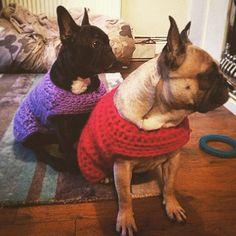 cozamundo's #crochet dog coats
