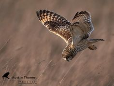A deep dive into the Easter Weekend... by Austin Thomas #owl