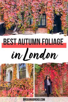 Where to See Autumn Colours in London | Best places to see Autumn Colours in London | Best Autumn Colour in London | Best London Foliage Spots to Visit in Autumn | Best Autumn Foliage Spots to visit in London | Where to see Autumn Leaves in London | Best spots to see Autumn Leaves in London #london #autumntravel #autumncolour #redivy #travel