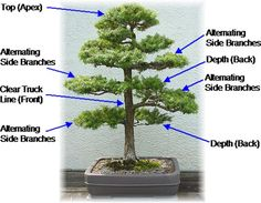 Easy steps to make bonsai at home