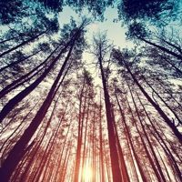 Landscape Theme (WiP) by Littlefive on SoundCloud