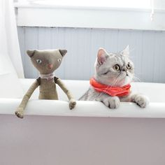 Before Pumpkin entered our lives Bacon was our imaginary friend.  #exoticshorthair #cat #cute #flatface #kitten #meow #pet #mreggs #catlover #exoticsofinstagram #smushface #weeklyfluff