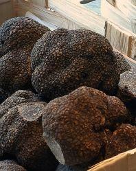 Maison De La Truffe - THE restaurant for truffes fraiches in Paris