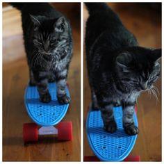 haha definitely would put my cat on it! :D @Carine Bricaud <3