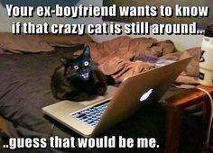 Ex's and crazy cats don't mix very well.