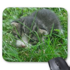 Jungle Kitten Mousepad!  #clever #cat #mouse #pad #mousepad #zazzle #store #kitten #office #gift http://www.zazzle.com/conquestkitty*