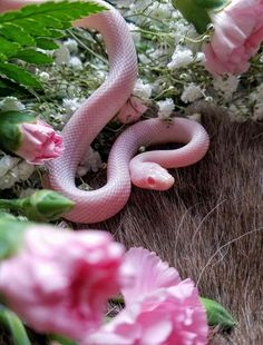 sweet little pink snake Pretty Snakes, Cool Snakes, Beautiful Snakes, Colorful Snakes, Les Reptiles, Cute Reptiles, Reptiles And Amphibians, Reptiles Preschool, Cute Baby Animals