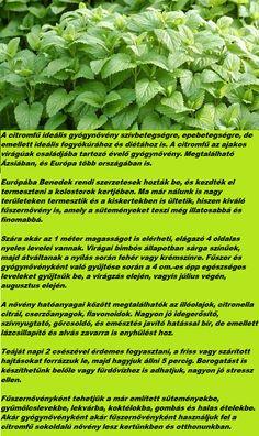 Lettuce, Marvel, Vegetables, Vegetable Recipes, Salads, Veggies