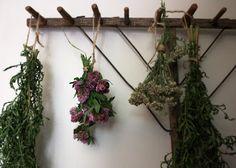 lil fish studios: red clover tea